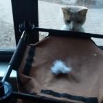 オモチャを吹っ飛ばすシュールな遊び方を編み出した猫と飼い主