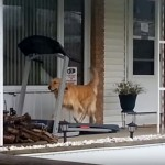 これがあれば平気だワン!散歩ができない雨の日のワンちゃんの過ごし方