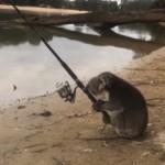 釣り人と一緒に釣りをはじめたフレンドリーなコアラ