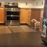 ペット侵入防止用マットを回避する賢いワンちゃん