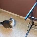 テーブルに飛び乗ることができず、失敗をごまかす子猫が可愛い!