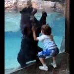 来園客の男の子の真似をしてピョンピョン飛び跳ねる動物園の陽気なクマさん