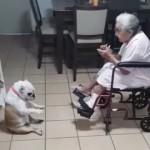 おばあちゃんの歌と手拍子に合わせてダンスを踊るワンちゃん