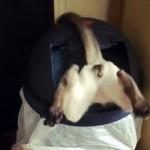 ゴミ箱にハマり出られなくなったドジな猫