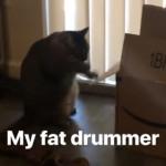 ドラムのようにダンボール箱を叩き続ける猫がおもしろい!