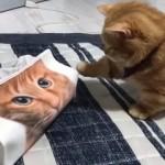 猫の顔が印刷されたティッシュケースにおっかなびっくりな子猫が可愛い!