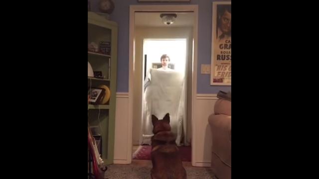 愛犬にマジックを仕掛けるも、愛想を尽かされた飼い主
