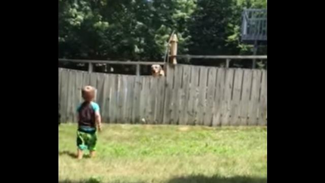 フェンス越しにボール遊びをする2歳児と隣の家のワンコが微笑ましい