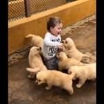 犬好きの人なら一度は体験してみたいあこがれの光景