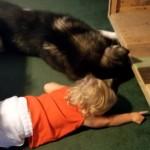 小さな妹のためにボールを取ってあげようとする心優しい犬