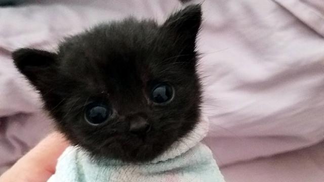 タオルに包まり、キャット・ブリトーになった子猫たちの可愛い写真 15枚