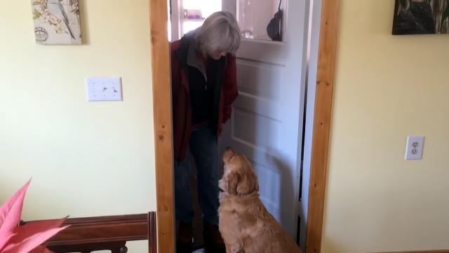 飼い主さんの「ただいまのキス」を頑なに拒否し続けるゴールデンレトリバー