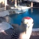 庭に設置された防犯カメラに気づき、これ見よがしにカメラを突くキツツキ