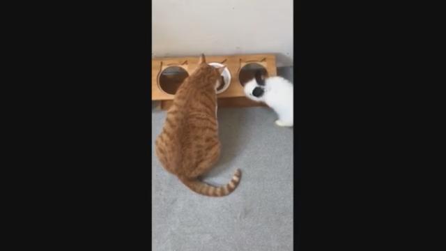 ウサギにご飯を横取りされて呆気にとられる猫・・・優しいね^^