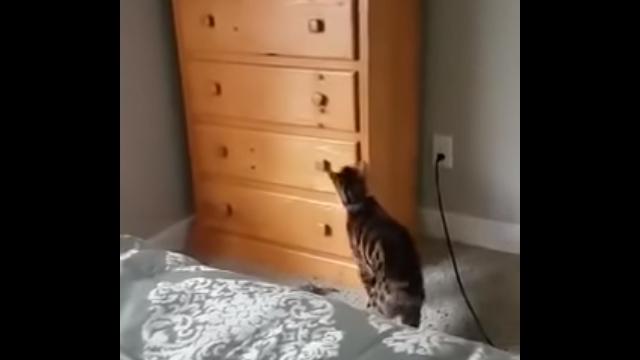 タンスの引き出しを開けて忍び込み、自分で引き出しを閉める器用な猫