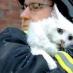 火災から救出された猫・・・デンマークとロシアではこんな違いがある