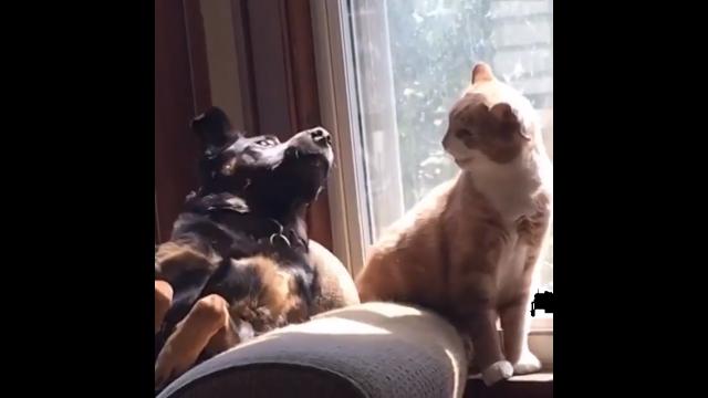 犬と猫の小競り合いがコントのようでおもしろい映像集