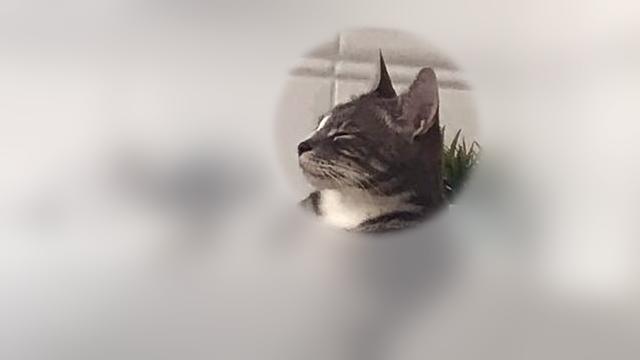 飼い主が留守なのをいいことに、思いっきりひとりの時間を満喫する猫