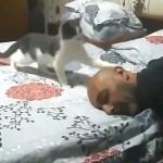 飼い主にかまって貰いたい子猫のアピール方法が可愛すぎ!