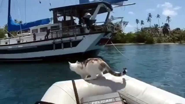 せっかちな猫→目測を誤る