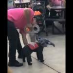 ゼンマイ仕掛けのおもちゃのゾウに扮した犬がキュートだと話題に