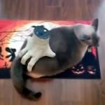 おもちゃの手でお尻を揉まれてご満悦な猫♪