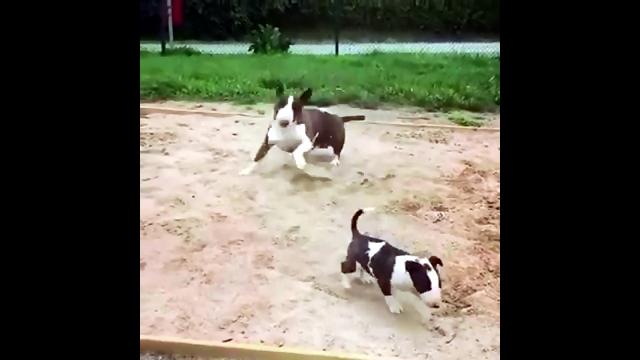 我が子そっちのけで砂場で狂ったように大はしゃぎする親犬