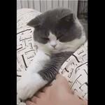 手を繋ごうとすると拒否する猫→リアクションが可愛すぎ!