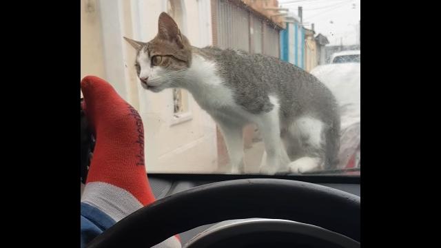 猫を怖がらせて追い払おうとする男性に起きた悲劇