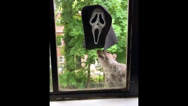 スクリームマスクにリスのエサを入れておくと面白いことが起きる