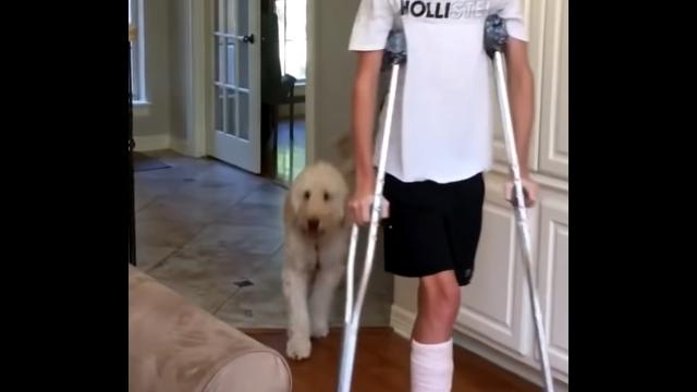 松葉杖をつく少年を気遣う愛犬の行動が愛らしい
