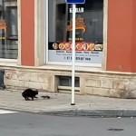 ネズミを捕らえようと意気込む猫→まさかの大きな誤算