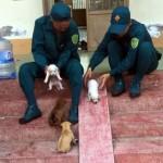 階段のスロープを滑り台にして子犬たちと遊んであげるお兄さん(ベトナム)