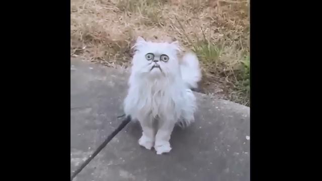 庭にやって来た不気味でおぞましい猫に罵声を浴びせる口の悪い男性
