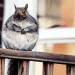 ぽっちゃりとした姿が妙に可愛い動物たちの写真集 18枚