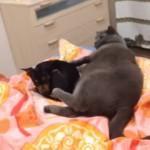 猫と添い寝したい寂しがり屋の犬→猫の反応は?・・・