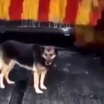自動洗車機で体を洗いにやってくる綺麗好きな野良犬が話題に(トルコ)