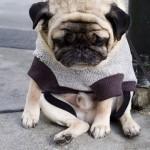 悲しげな表情が切なくて可愛いワンコたちの写真 14枚