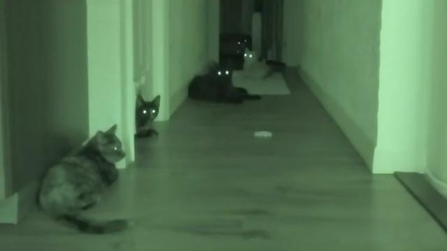 暗視装置を使って夜中の猫の様子を撮影した映像がおもしろい!