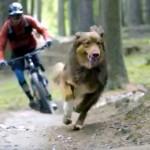 森の中をマウンテンバイクで駆け下りる飼い主と一緒に全力疾走する犬が楽しそう♪