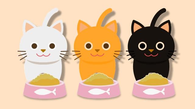 猫3匹に平等にエサを与えた結果・・・難解すぎる猫ロジック