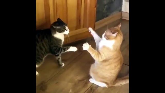 相手に触れずに倒してしまう不思議なパワーを持った猫