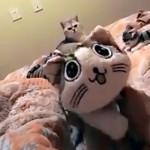 触っちゃダメ!|ぬいぐるみに触れて愛猫に怒られる飼い主