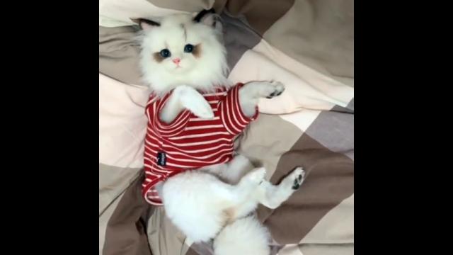 えっ、まさか!? ・・・ 可愛いけど、どことなく違和感のある猫
