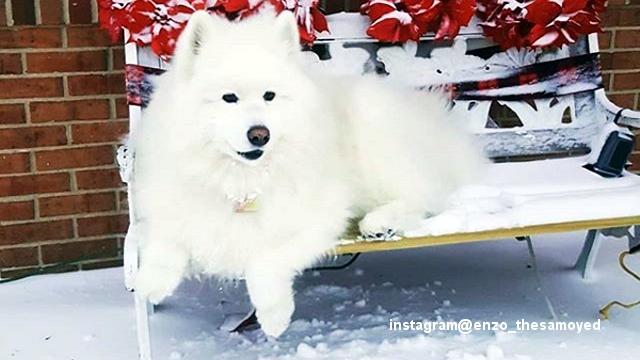 雪が降ると我が家の犬は一回り大きくなるという飼い主、その理由は?・・・