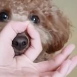 海外で流行っている飼い主と犬の「スヌートチャレンジ」という遊びがおもしろい!
