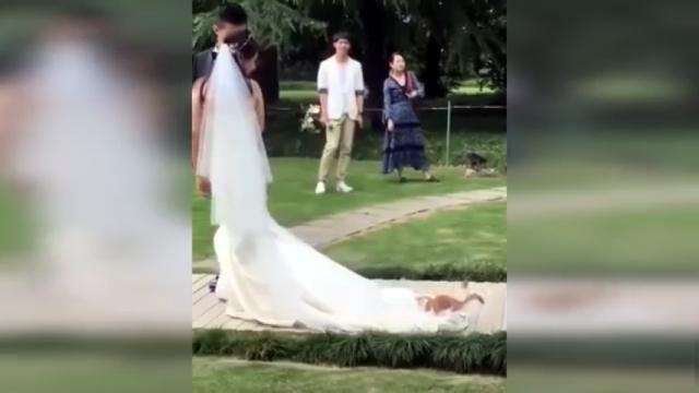 結婚式に乱入、花嫁さんのドレスの裾をオモチャ代わりにする可愛い子猫