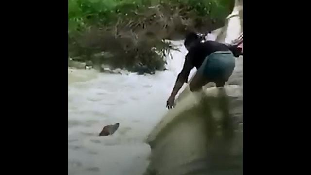 増水した川に落ちて溺れそうな犬を危険を顧みずに救出しようとする男性