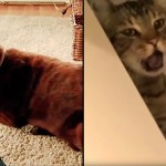 犬のオナラの臭いをまともに喰らってしまった猫の悲劇