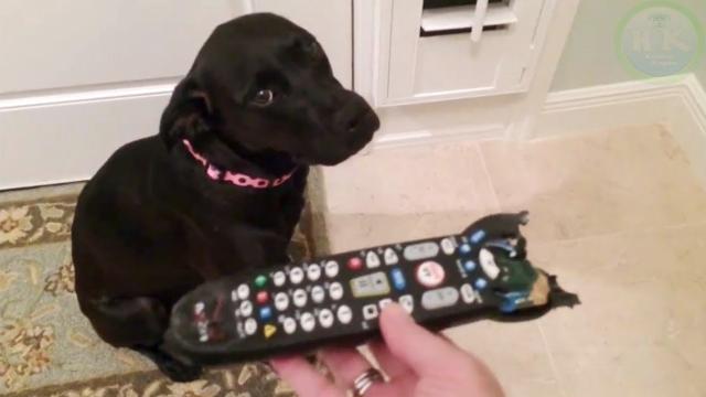 性格の違いがわかるイタズラがバレたときの犬と猫のリアクション